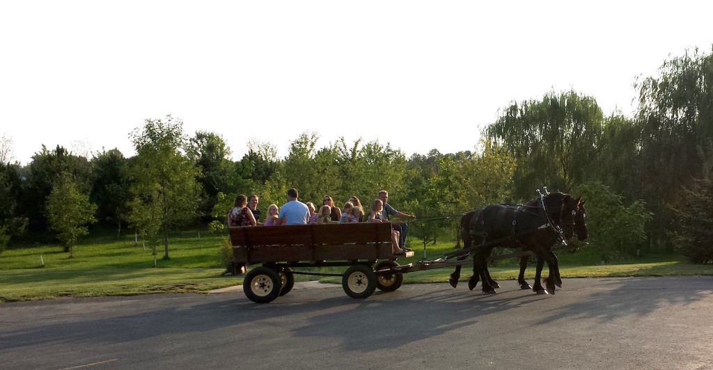 Horse-drawn carriage at Young People's Dinner Sep 2015